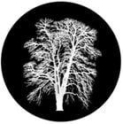 Barren Inverted Tree Glass Gobo