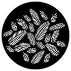 Gobo Ferns