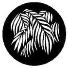 Gobo Palm