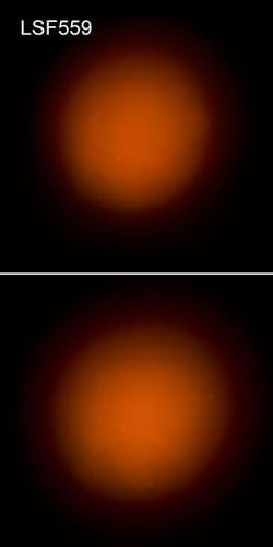 "Elation Pro Lighting LSF559 LSF10-24 Light Shaping Filter, 10 Degrees, 20"" x 24"" Sheet LSF10-24"