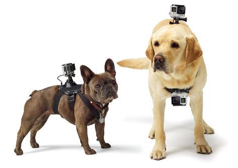 GoPro Inc ADOGM-001 Fetch Dog Harness Camera Mount for GoPro ADOGM-001