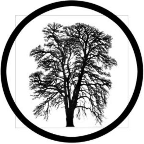 Rosco Laboratories 81178 Barren Tree Glass Gobo 81178