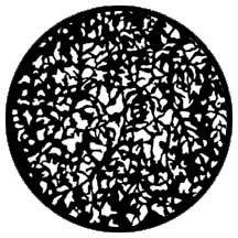 Rosco 79660 Gobo Realistic Leaves 2 79660