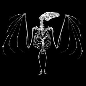 Glass Gobo, Bat Skeleton