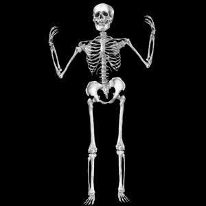 Glass Gobo, Skeleton