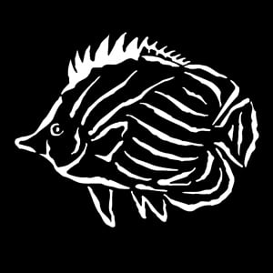 Steel Gobo, Sea Tropical Fish