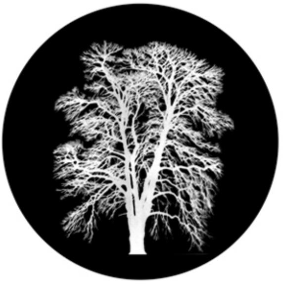 Barren Inverted Tree Glass Gobo